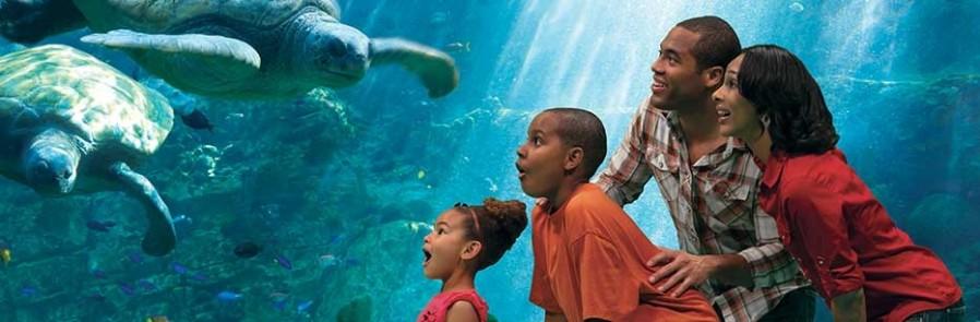 SeaWorld Orlando - 1 visita - Acima de 3 anos (Ingresso Eletrônico)